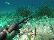 Save Posidonia, proyecto medio ambiental éxito.