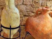 Cata vinos Mallorca. ¡Tanto descubrir disfrutar!