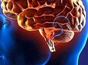Alimentos fantásticos para cerebro