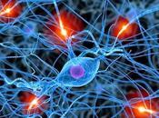 Identifican Nuevos Subtipos Neuronas