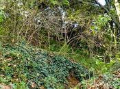 SALUD Piernas pesadas verano: cuatro plantas salen ayuda