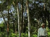 Jadav payeng: hombre bosque