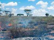 Extinción incendios forestales