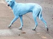 Perros azules culpa contaminación ríos