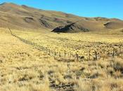 Parque Cardones: muestra diversidad andina