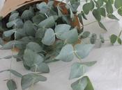 Aroma eucalipto...