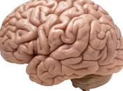 Como Mantener Cerebro saludable toda vida