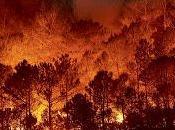 Efectos incendios forestales