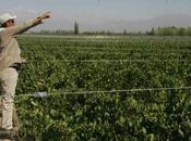 Alerta mundial: cambio climático amenaza producción vinos champán