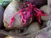 Mozzarella Remolacha oscurecida
