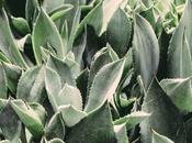 Cuidados Aloe vera para piel
