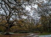 Bosque Orgi, donde escondería mismísimo Robin Hood