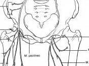 Lesión vértebra