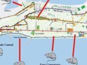 ratas pasean Cádiz.
