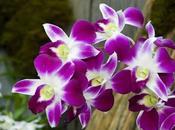 Flores llenan color jardín