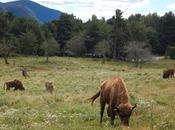 Lacuniacha. Parque Faunístico Pirineos