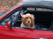 Todo necesitas saber para viajar mascotas Europa