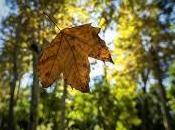 repente, otoño