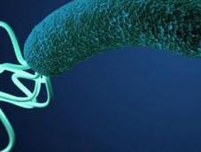 Como Acabar Helicobacter Pylori