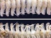 Nuevos diplópodos cavernícolas China