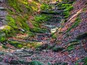 Selva Irati, buscando colores otoño