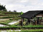 Indonesia hacer ubud