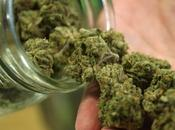 Todo sobre Cannabis, usos, efectos, legalidad