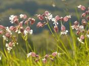 Plantas eliminan humedad ambiente