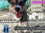 """Recogida alimentos para sonrisa Animal"""". 10-11 noviembre"""