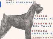 Seminario iniciación peluquería canina