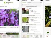 PlantNet, identifica plantas móvil