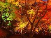 Estoy otoño...