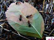 ¿Qué significa soñar hormigas?