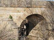 Puentes Puente Arzobispo