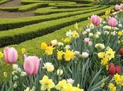 Cuida jardín cada siempre tendrá flores