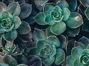 «jardines efímeros acuerdo)» javier serrano sánchez