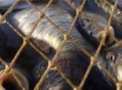 Genocidio peces obras Lago Casa Campo
