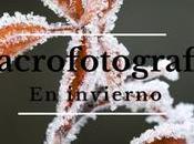 Macro fotografia invierno