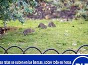 Dejaron Municipalidad? RATAS INVADEN PLAZA ARMAS VICENTE…