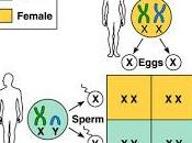 Efectos colaterales cambio climático: cambios proporción sexual algunas especies