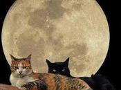 gatos nuestro tejado