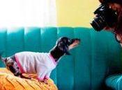 ideas negocio tiempo parcial para amantes animales