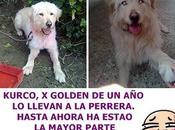 Kurko, quieren abandonar perrera