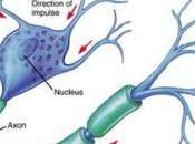 Neuronas artificiales para destruir Alzheimer