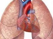 Logran Regenerar Pulmones Dañados Usando Autotransplante