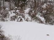 Nieve dura. blanda