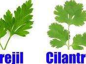 cilantro, especia muchas propiedades