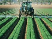 abre debate: ¿afectan pesticidas embarazo?