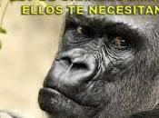 Alegato grandes simios