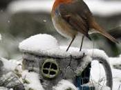 invierno nieve...